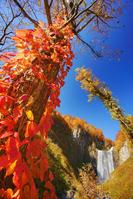 北海道 賀老の滝とツタウルシとブナなどの紅葉
