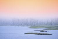 北海道 別海町 野付半島ナラワラの海霧と水鳥