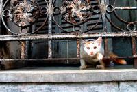 アルゼンチン フェンスの柵の隙間から顔を出す猫