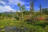 長野県 乗鞍高原・レンゲツツジ咲くどじょう池と乗鞍岳