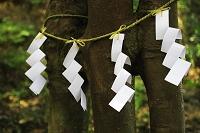京都府 月読神社 むすびの木(縁結び)