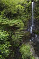 鹿児島県 嘉入の滝