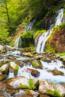 山梨県 新緑の吐竜の滝