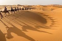 モロッコ サハラ砂漠 ラクダ