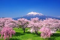 青森県 春の岩木川河川公園
