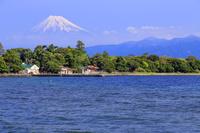 大瀬崎より富士山