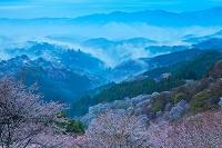 奈良県 吉野山の桜と雲海