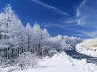 長野県 カラマツ霧氷とビーナスライン
