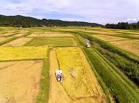 新潟県 コシヒカリ収穫
