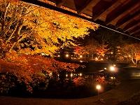 静岡県 修善寺虹の郷の夜 紅葉 ライトアップ