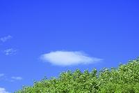 秋田県 由利本荘市 若草と雲