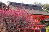 京都府 下鴨神社 光琳の梅と楼門