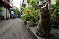 東京 月島の路地と猫
