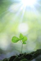 原生林に芽吹く若葉
