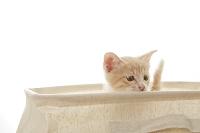 箱から顔を出す子猫