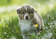 花畑に立つ子犬