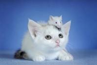 ネコとネズミ