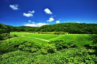離島最北の水田