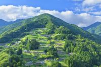 日本 徳島県 落合集落