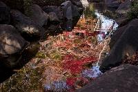 水辺の映り 紅葉