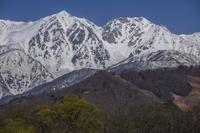 残雪の白馬鑓ヶ岳と杓子岳