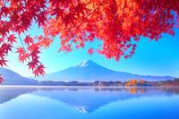 日本 山梨県 富士山と紅葉