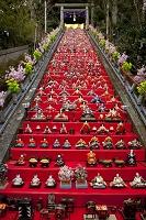 千葉県 かつうらビッグひな祭り 遠見岬神社
