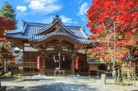 長野県 懐古園 紅葉の懐古神社