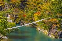 静岡県 秋の寸又峡の夢の吊橋