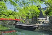 岐阜県 新緑の水門川と住吉燈台 奥の細道むすびの地