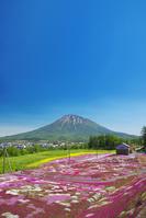 北海道 三島さんの芝桜庭園と羊蹄山
