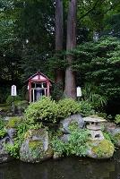 福井県 劔神社 子寶さまと縁結び夫婦杉