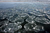 北海道 十勝川の河口がハス葉氷で覆われる