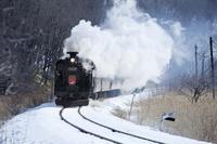 北海道 釧路湿原を疾走するSL冬の湿原号