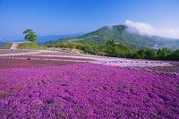 愛知県 茶臼山高原の芝桜の丘と茶臼山