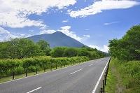 栃木県 夏の戦場ヶ原