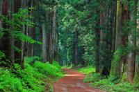 栃木県 初夏の日光杉並木街道