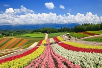 日本 北海道 美瑛町 四季彩の丘