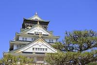 大阪府 大阪城と松