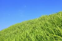 風吹く土手の草原と青空