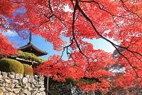 京都府 紅葉の善峯寺