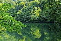 青森県 夏の十二湖 鶏頭場の池