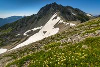 富山県 花咲く立山稜線
