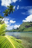 ポリネシア モーレア島
