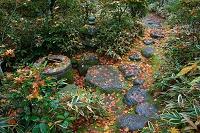 京都府 高桐院 秋の下り蹲踞