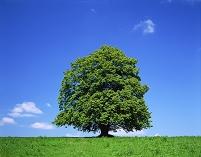 スイス 一本の木