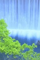 岩手県 八幡平 松川の堰堤の流れと新緑