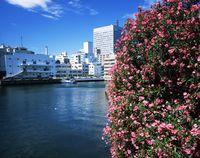 神奈川県 大岡川からの横浜市街