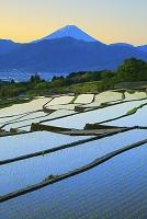 山梨県 朝の富士山と田植え直後の中野の棚田