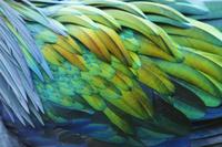 カラフルな羽